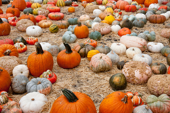 101017_PumpkinPatch_0021